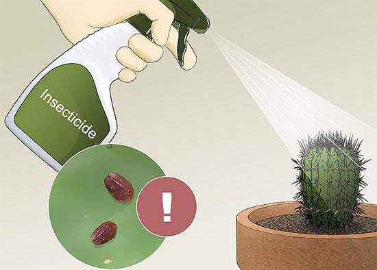 نحوه نگهداری کاکتوس در منزل: چگونه کاکتوس را در آپارتمان نگه داریم؟