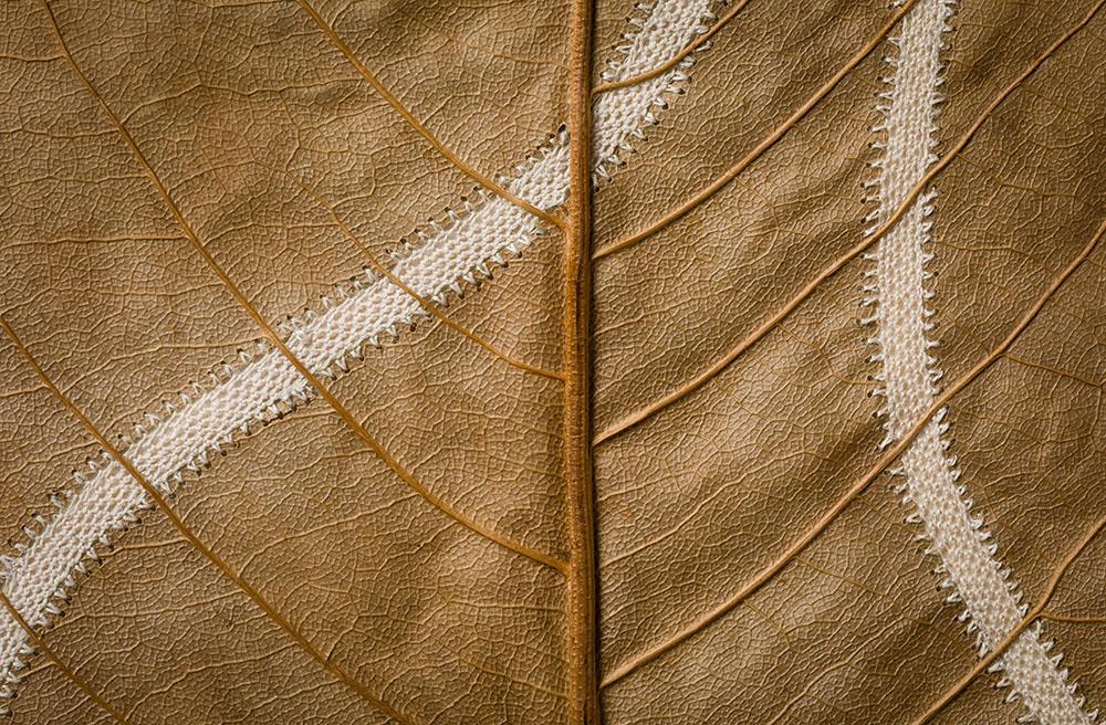 هنر قلابدوزی روی برگ های خشک