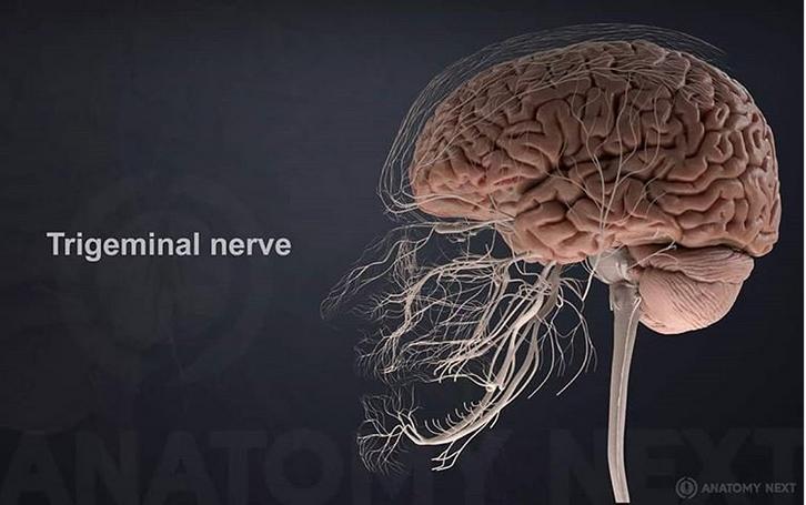 18 واقعیت عجیب و جالب در مورد بدن انسان که احتمالا نمیدانید1
