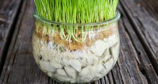 grass 6 310x165 - سبزه عید را در تنگ شیشه ای درست کنید