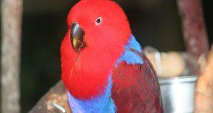 2044220 671 1 310x165 - تعدادی از زیباترین حیوانات جنس ماده جهان را ببینید