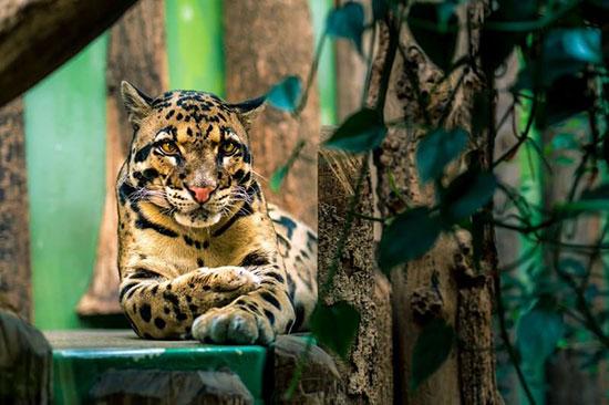 ۱۰ مورد از زیباترین حیوانات ماده جهان