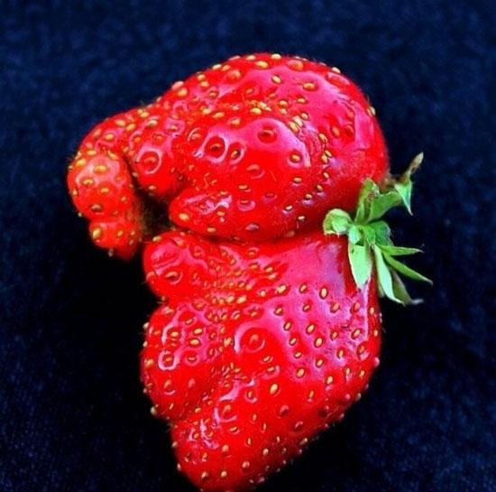 268882 913 - تصاویر جالب و خنده دار از میوه ها