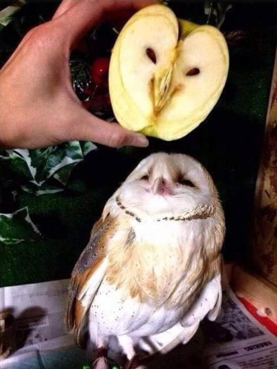 268884 297 - تصاویر جالب و خنده دار از میوه ها