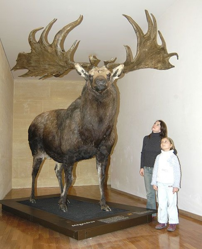 بزرگ ترین مخلوقات روی زمین