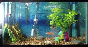 153794 692 310x165 - آموزش تصویری تمیز کردن اکواریوم آب شیرین