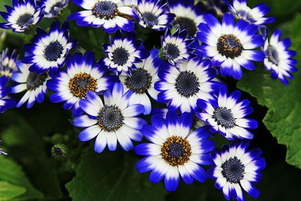کدام گلها برای کاشت در فصل زمستان مناسبند؟