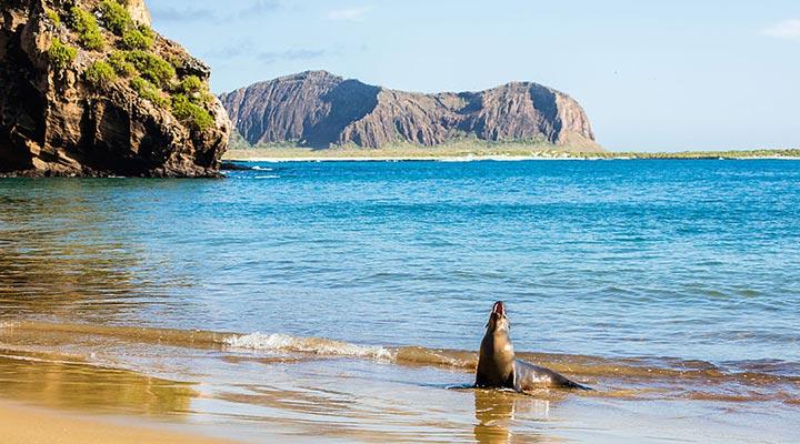 گالاپاگوس - زیباترین جزیره های جهان