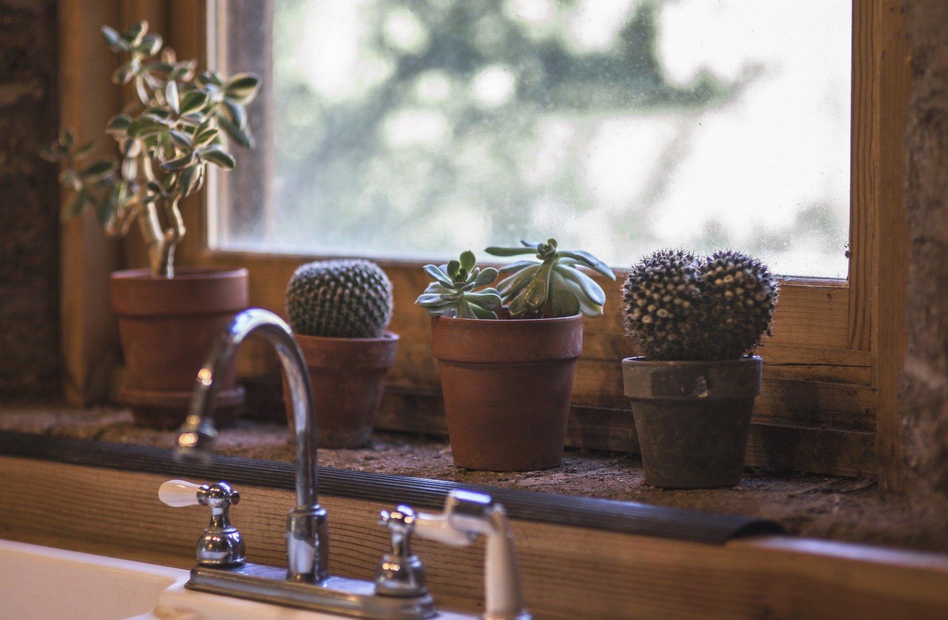 cactus 1 1 - گیاهان مناسب اپارتمان با شرایط نگهداری آسان