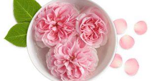 hee664 310x165 - خواص گلاب و روش تهیه گلاب در خانه