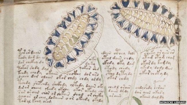 68288328 voynich manuscript 66 - آثار باستانی که هنوز هم رازشان کشف نشده است