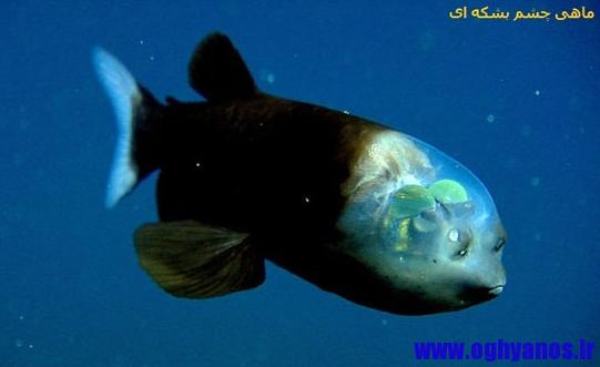 موجودات عجیب در اقیانوس